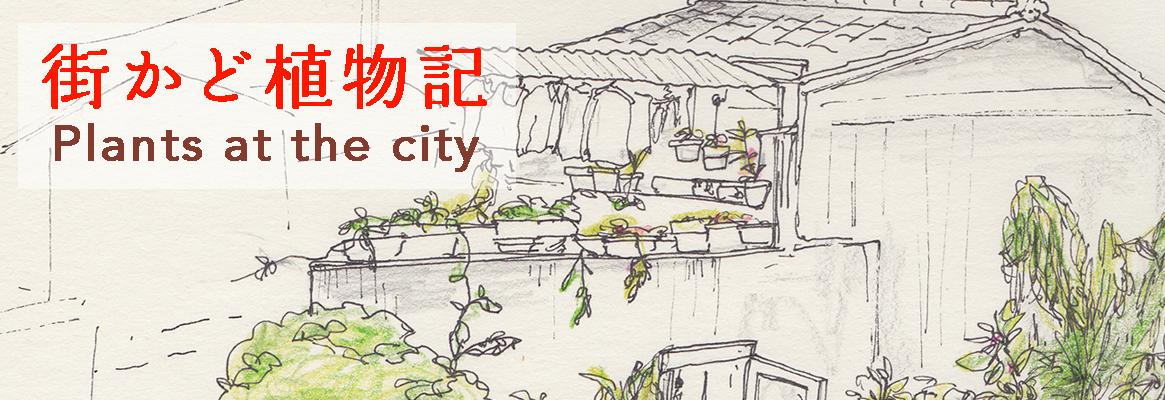街かど植物記 / Plants at thecity