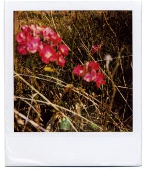 Flower in Australia.