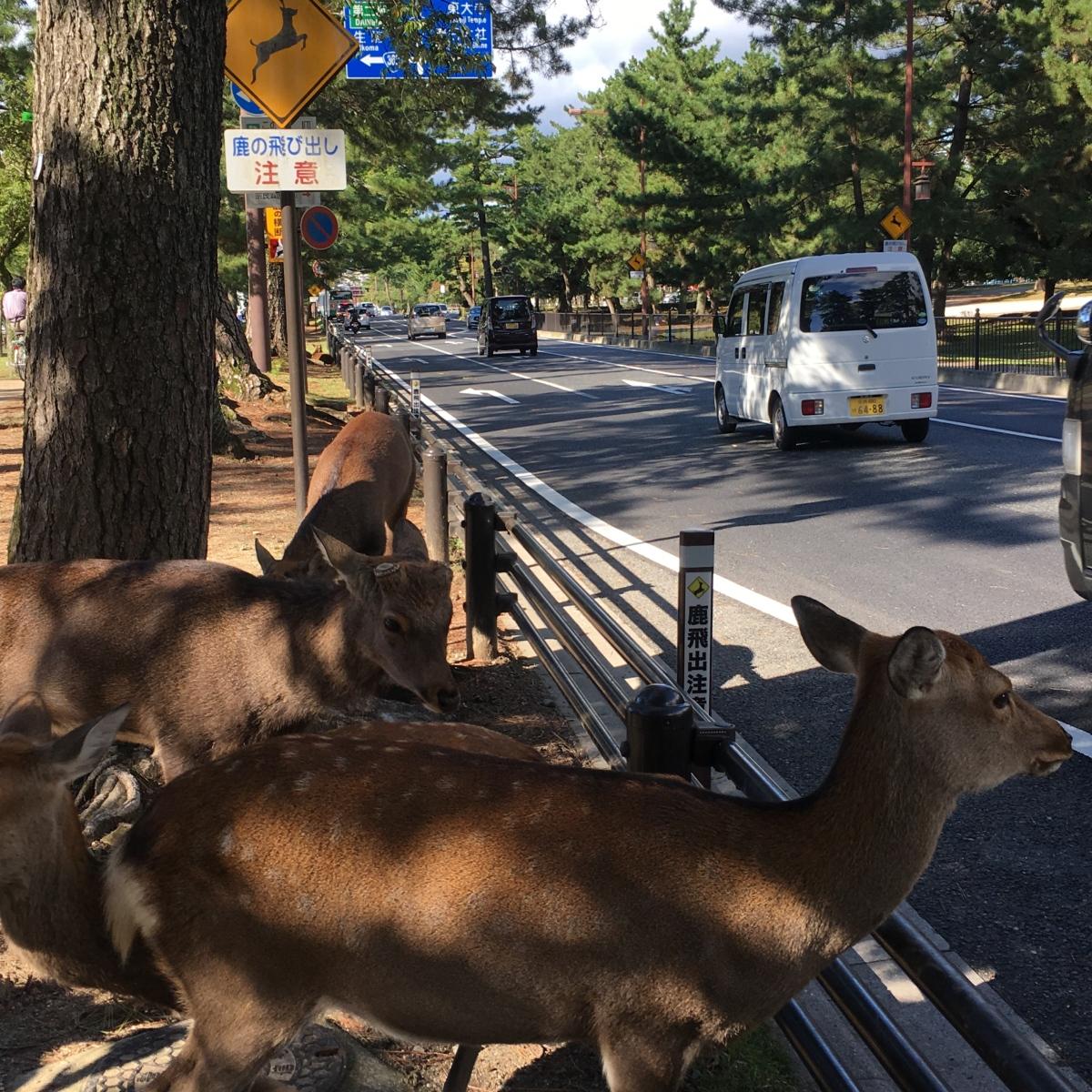 鹿と看板の蜜月