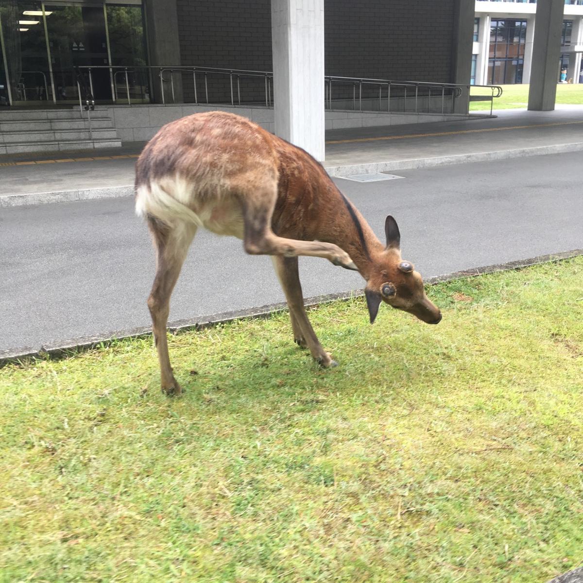 [ 鹿日記 ] グッドモーニング鹿 !Good morningdeer
