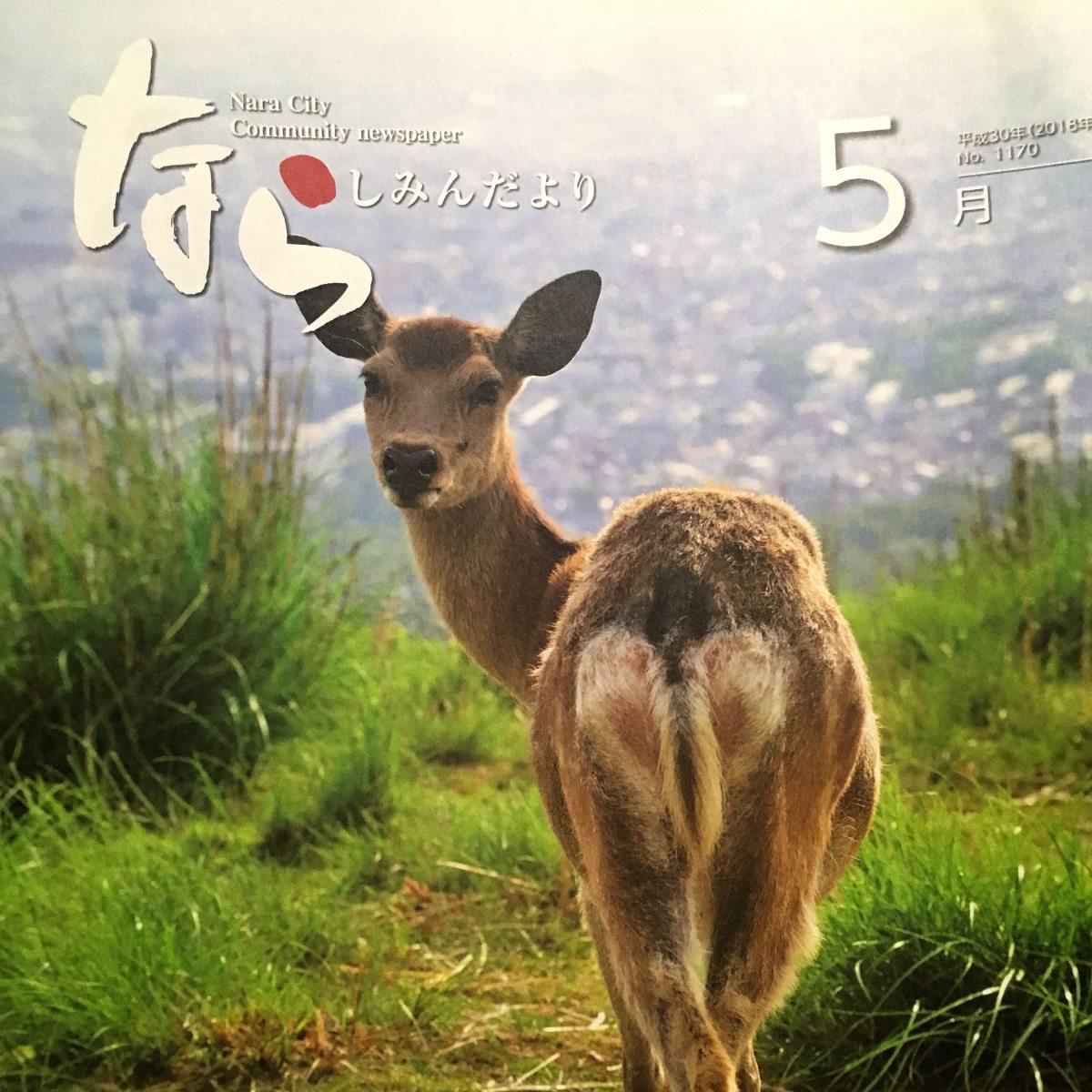 [ 鹿の連載  ] 鹿まっしぐら!  Deer crackerdelivery
