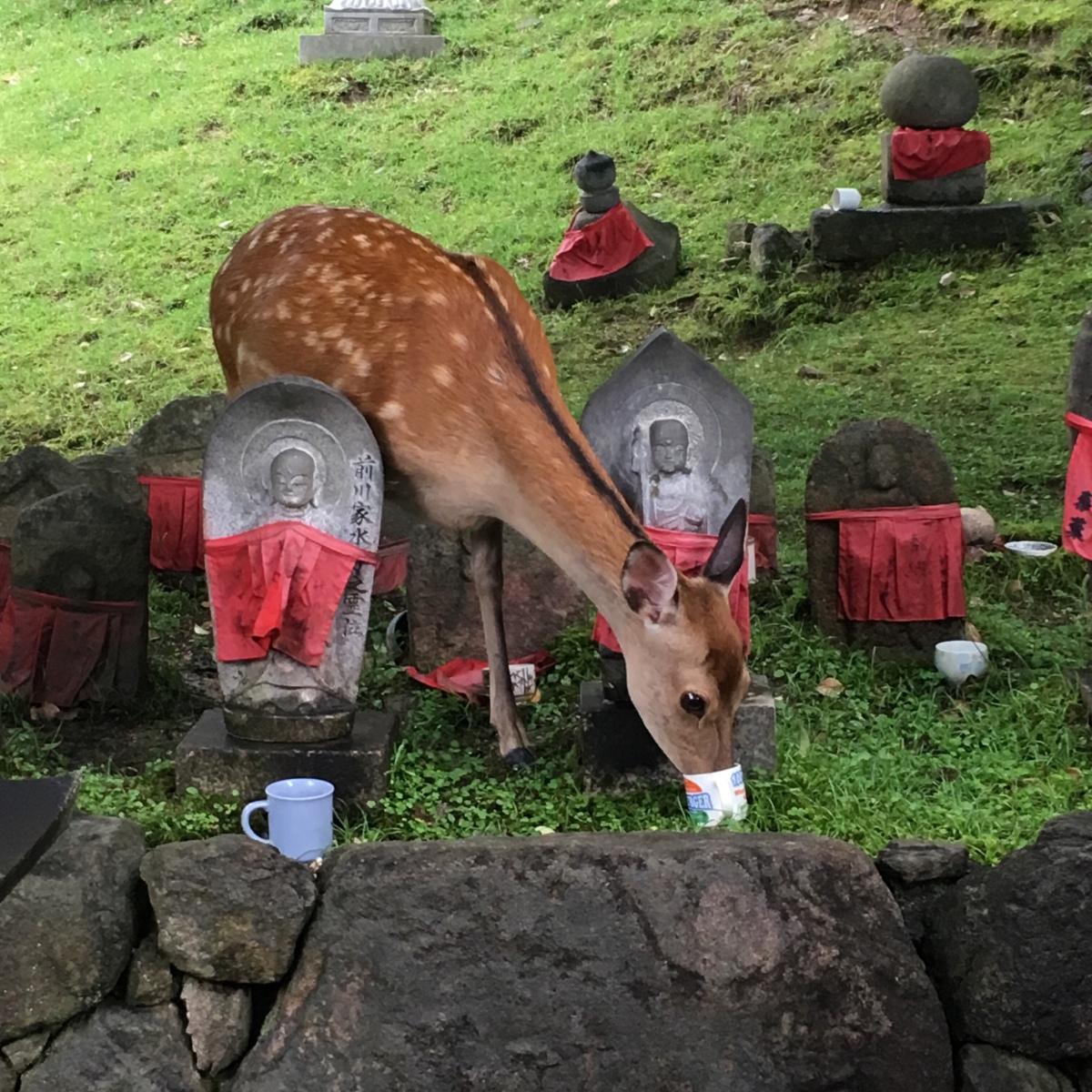 [ 鹿日記 ] スクープ!鹿の不徳。Oh,deer….